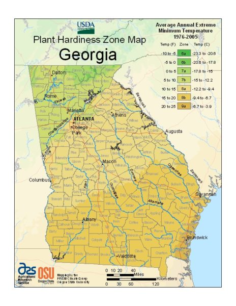 Georgia Grow Zone Map - BuyEvergreenShrubs.com