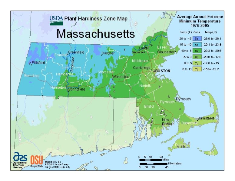 Massachusetts Grow Zone Map - BuyEvergreenShrubs.com