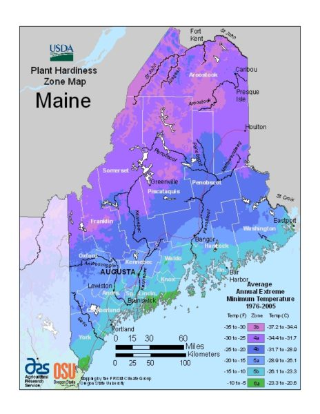 Maine Grow Zone Map - BuyEvergreenShrubs.com