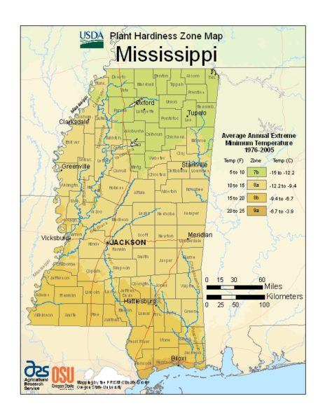 Mississippi Grow Zone Map - BuyEvergreenShrubs.com