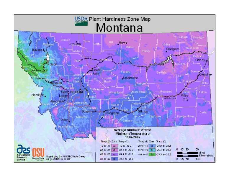 Montana Grow Zone Map - BuyEvergreenShrubs.com