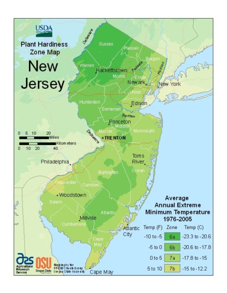 New Jersey Grow Zone Map - BuyEvergreenShrubs.com