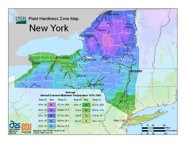 New York Grow Zone Map - BuyEvergreenShrubs.com