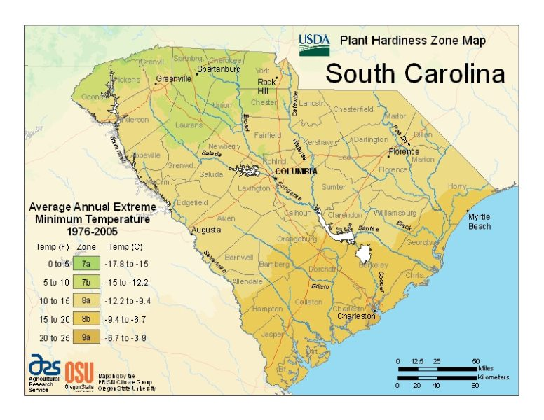 South carolina Grow Zone Map - BuyEvergreenShrubs.com