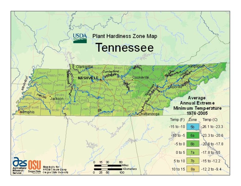 Tennessee Grow Zone Map - BuyEvergreenShrubs.com