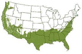 USDA Hardiness Zones 7 - 10