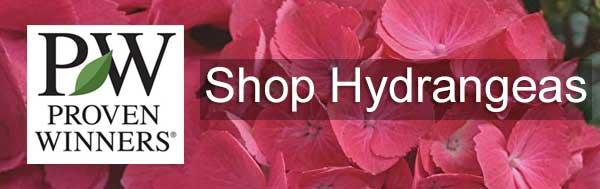 Shop Proven Winners Hydrangeas