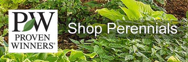 Proven Winners Perennials for sale
