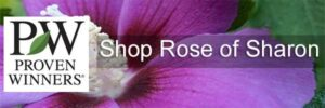 Proven Winners Rose of Sharon for sale