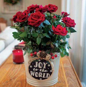 Jackson & Perkins Gift Plants
