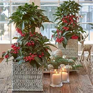White Flower Farm tabletop decor