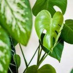 easy to grow houseplant